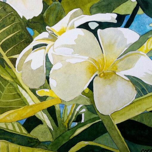 Aloha Melia 12x12 by Coco