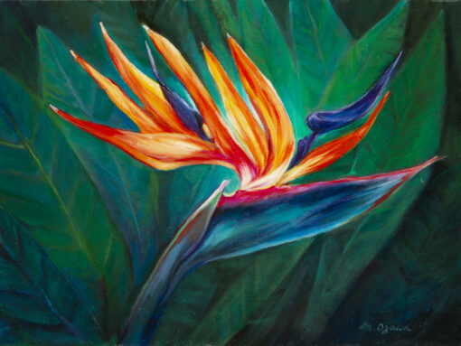 Bird Of Paradise by Mimi Ozawa